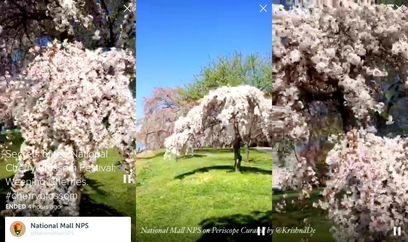 How the National Mall NPS uses Periscope to share information about the national cherry blossom festival in Washington DC